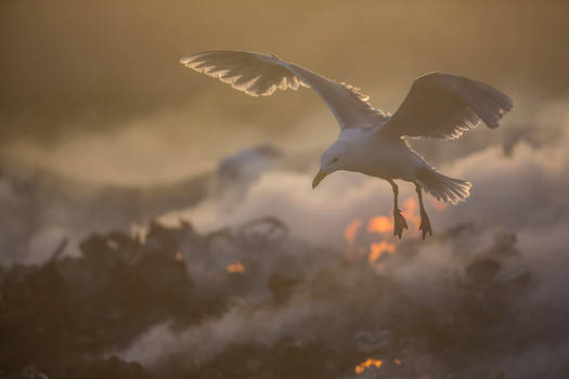 Michael Bay nature photography