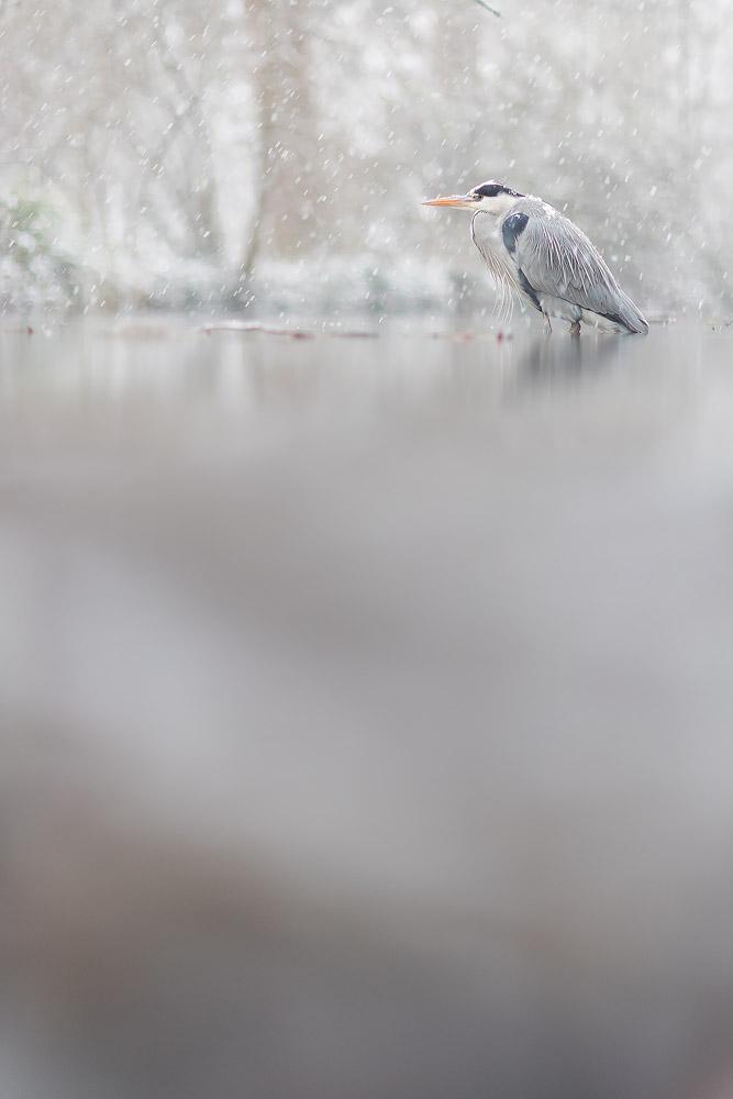 Bad expectations, good bird ! by phalalcrocorax