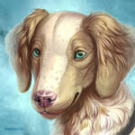 Shoe, the Brittany Spaniel