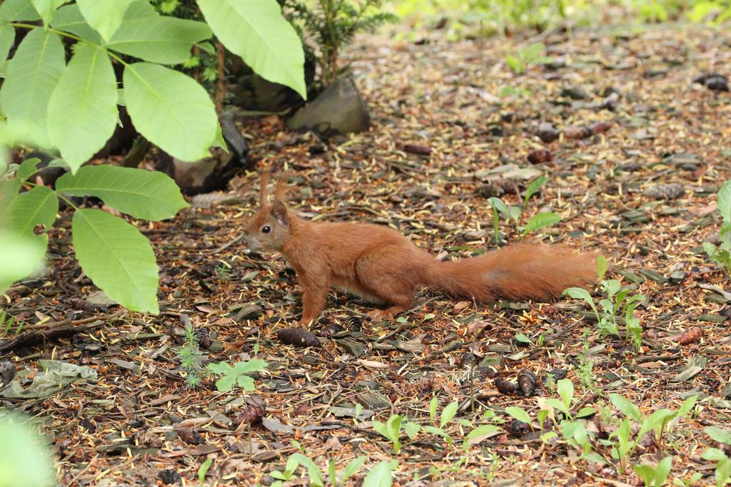 Eichhörnchen-dating-site
