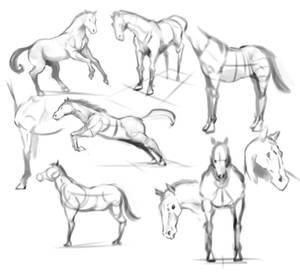 Sketch119_horse study