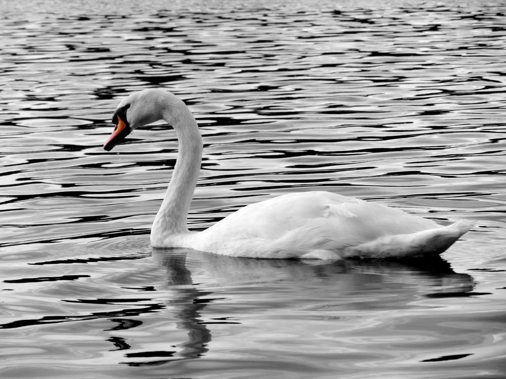 Swan by Ciastka