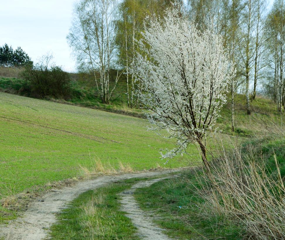 Spring by Ciastka