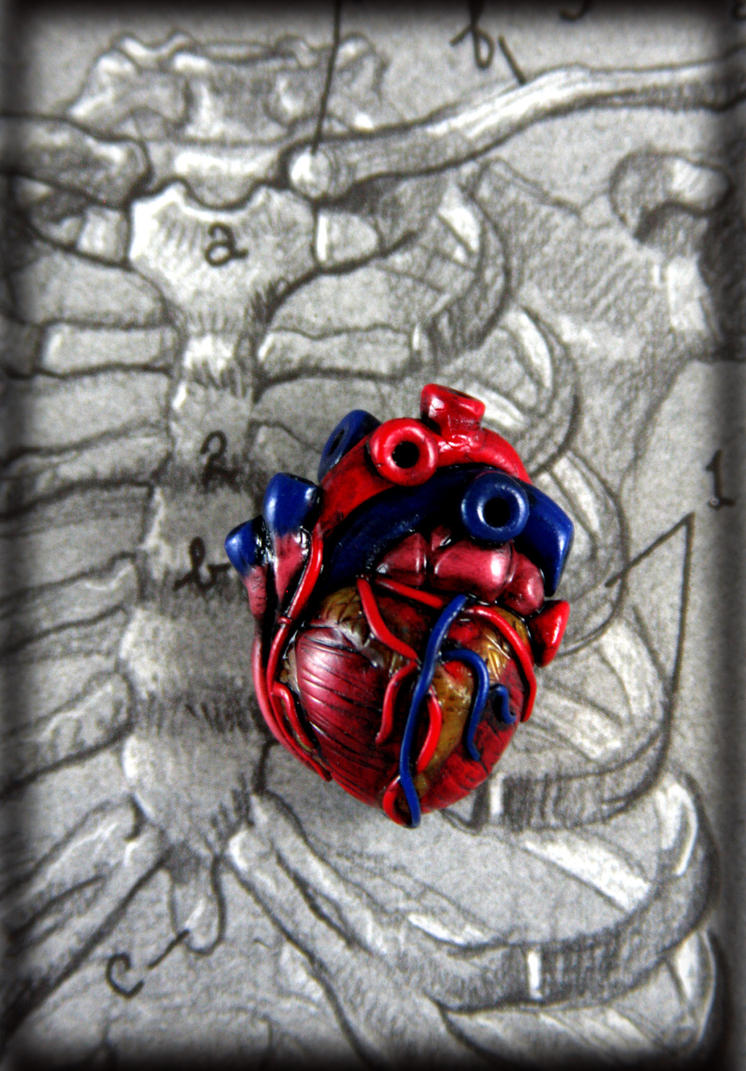 Anatomical Heart Pin by NeverlandJewelry
