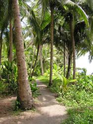 Costa Rica ANAI path II