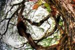 pohon kering2