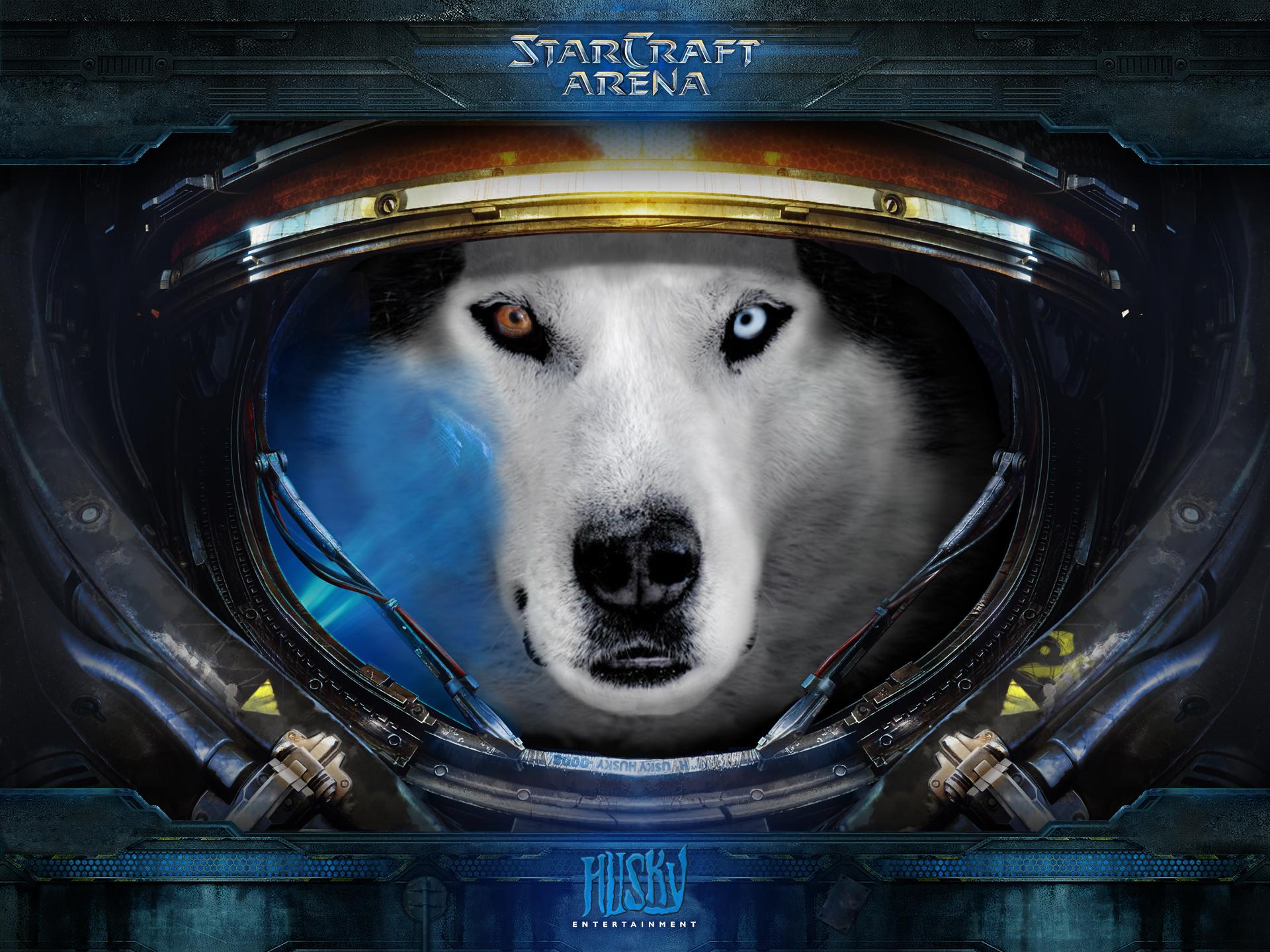 husky starcraft net worth