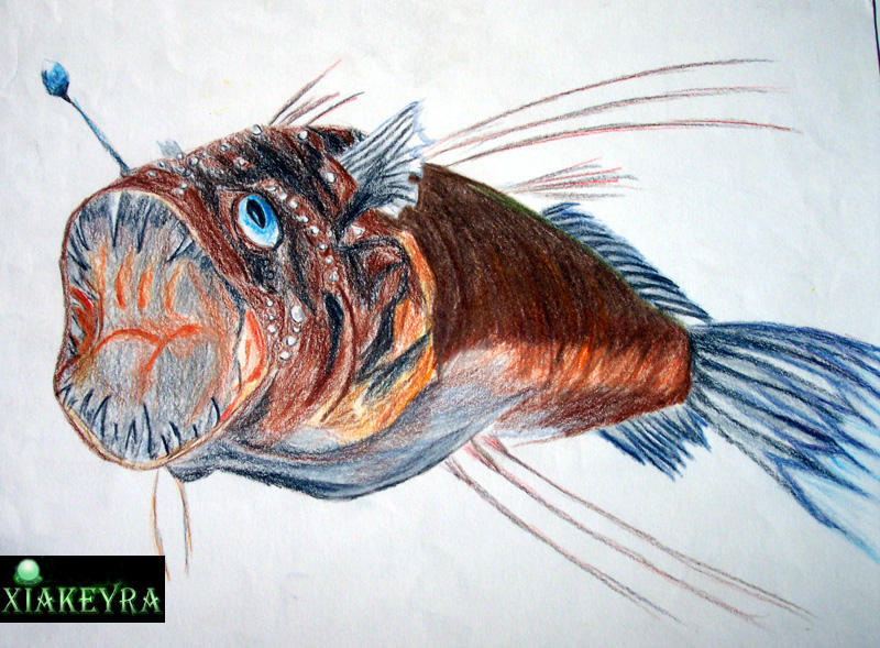 Abyssal Zone Fish