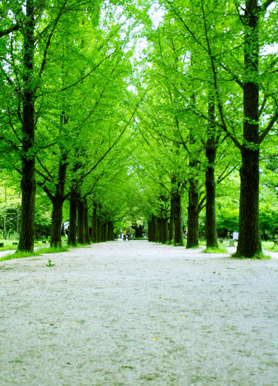 nami island by holicious on deviantart