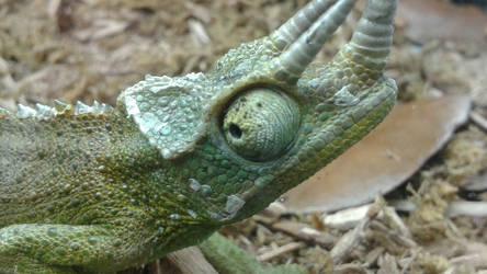 Jackson Chameleon by OneSmartChicken