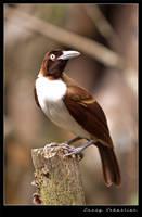 Bird by lessysebastian