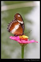 Butterfly by lessysebastian