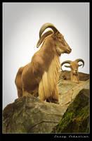 Mountain goat by lessysebastian