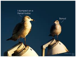 Seagull Talk