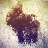 My Baby by DusterAmaranth