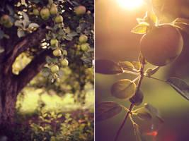 Fall by pinkparis1233