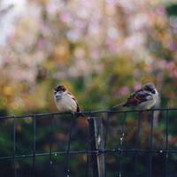Love Birds by pinkparis1233