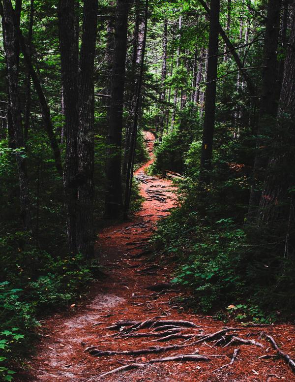 The Hike by pinkparis1233
