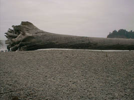 First Beach - Forks, WA by RC-ForksWA