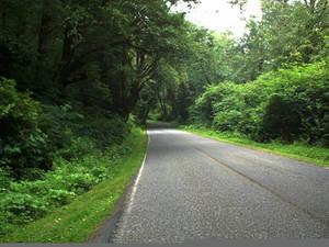 Road to Rialto Beach - Forks