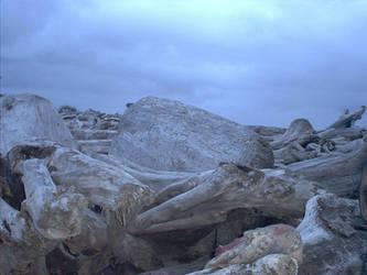 Beach Logs ala Kalaloch Beach by RC-ForksWA