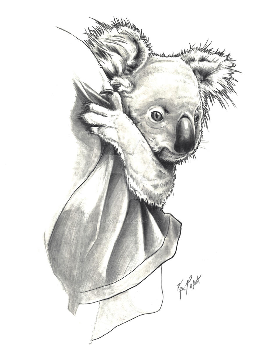 Line Drawing Koala : Koala by freakcastle on deviantart