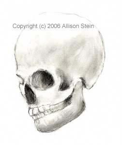 Skull Study, Side by darkart42