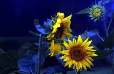sun_blue