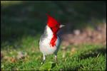 Ko'Olina Birdwatching 3