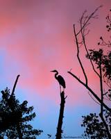 Sunrise Layover by ryangallagherart