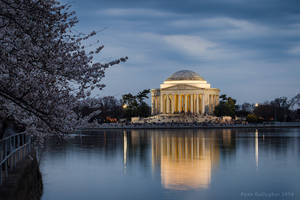 Overhanging Blossoms at the Tidal Basin by ryangallagherart