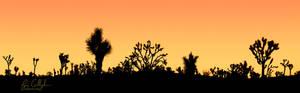 Approaching Sunrise in Joshua Tree