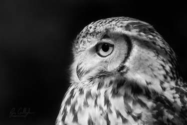 Pharaoh Owl by ryangallagherart
