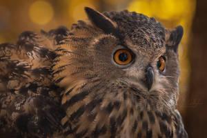 Eurasian Eagle Owl by ryangallagherart