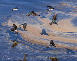 Tree Swallows in the Salt Marsh by ryangallagherart