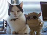Kuchi and Seamour