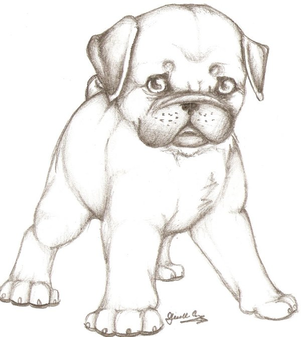 pug puppy coloring pages - puppy pug by gothicnightmares on deviantart