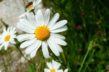 flower by alekswasheree