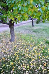 autumn by alekswasheree