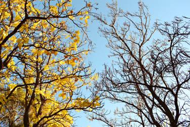 autumn 2 by alekswasheree