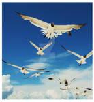 Sky Gull