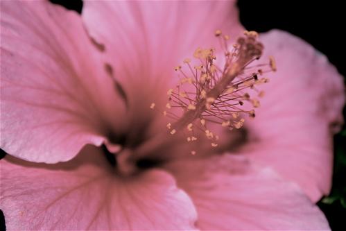 faded flower power by wonderwalleclipse