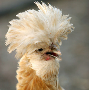 PoultryLaser's Profile Picture