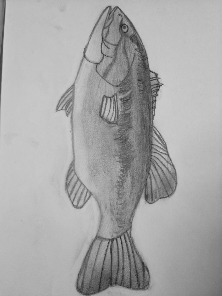 Largemouth Bass  by renegadeRifleman