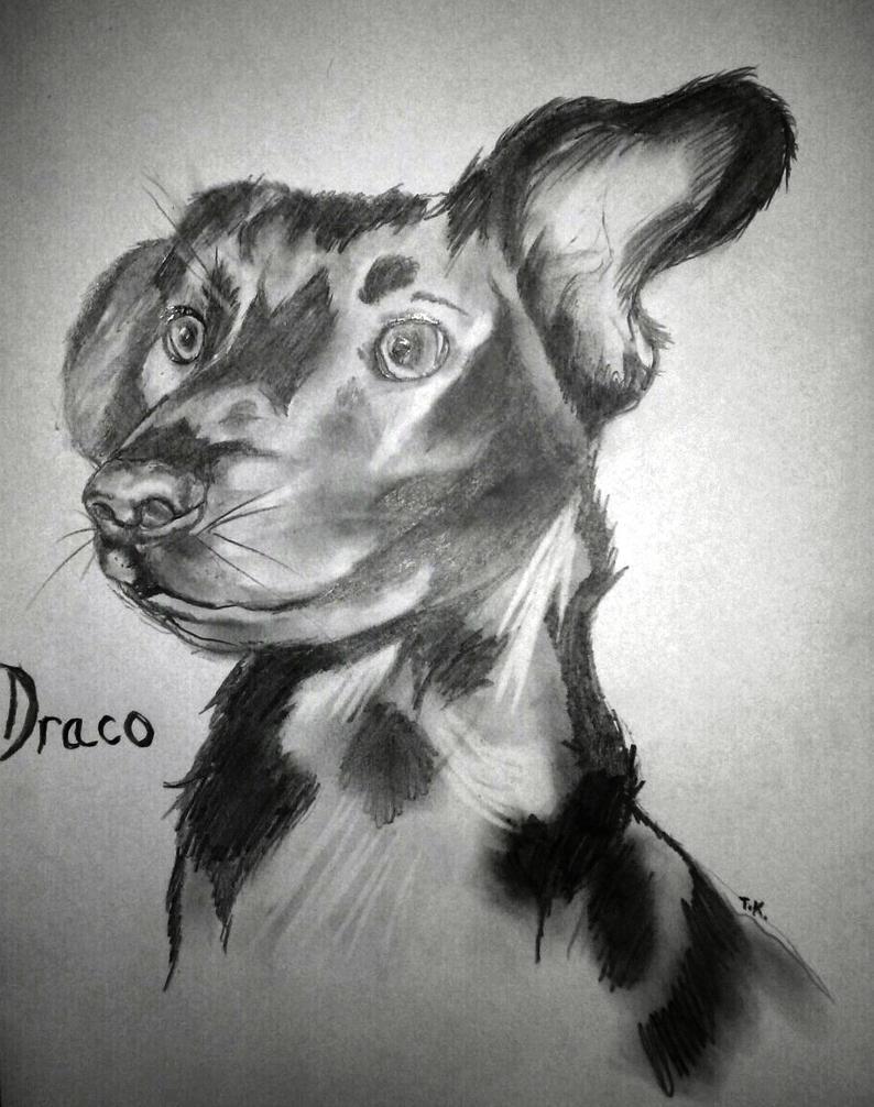 Draco by Tomek2289