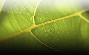 Leafie by Epheus