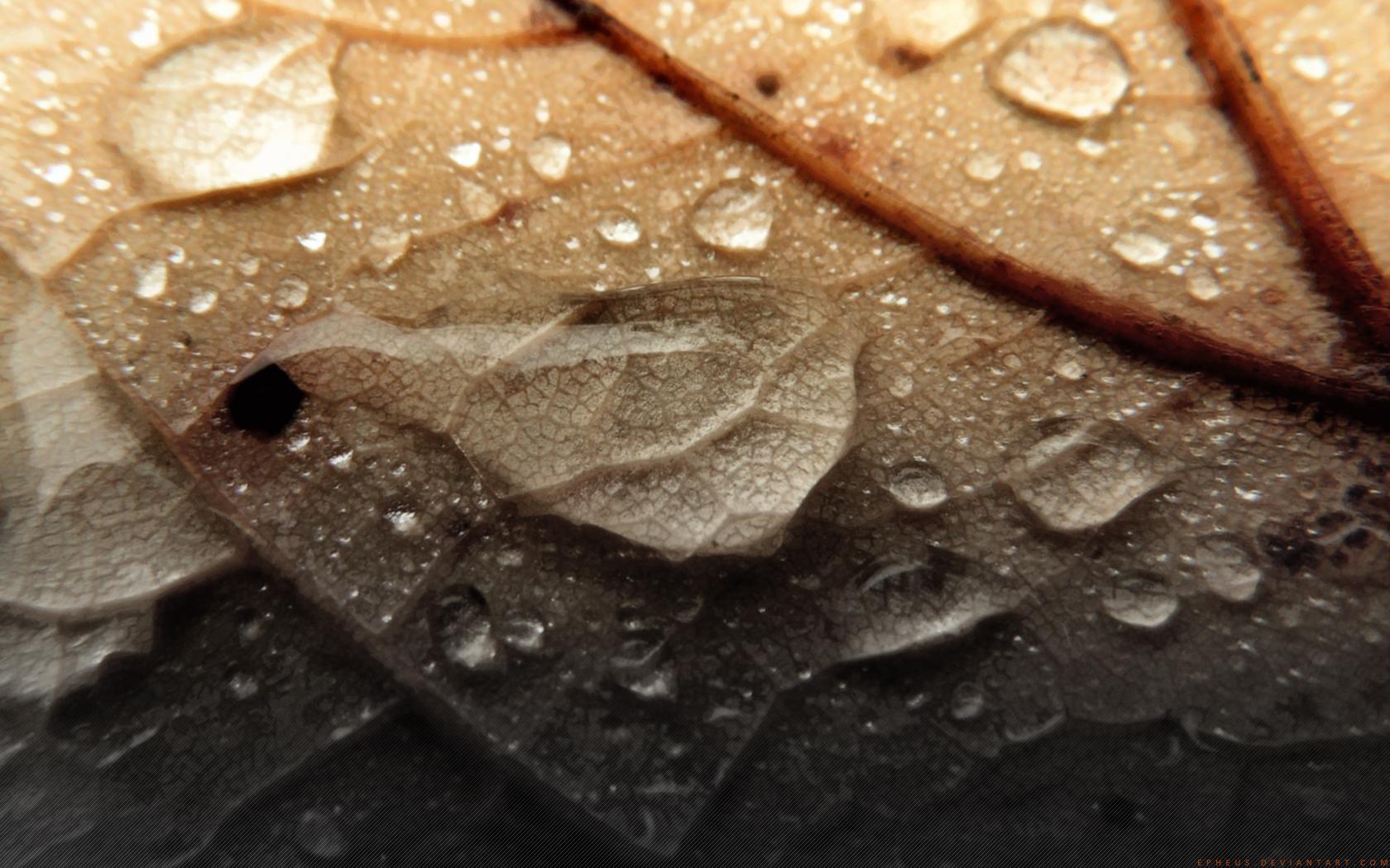 Autumn Rain by Epheus