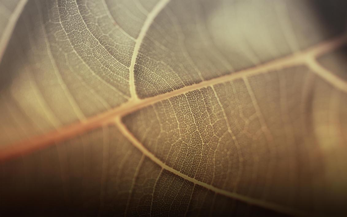 Leafie PRO by Epheus