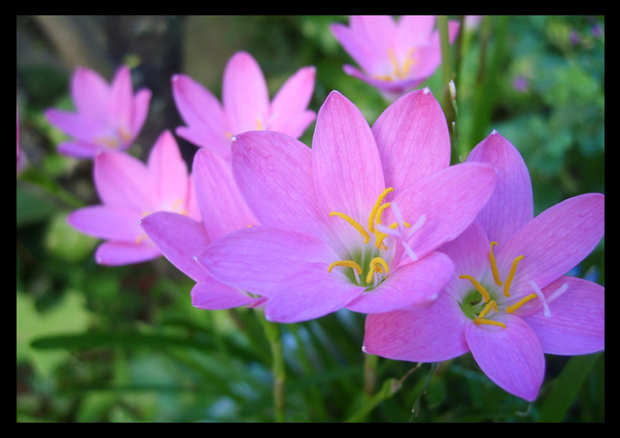 pretty flowers by epaz on deviantart, Beautiful flower
