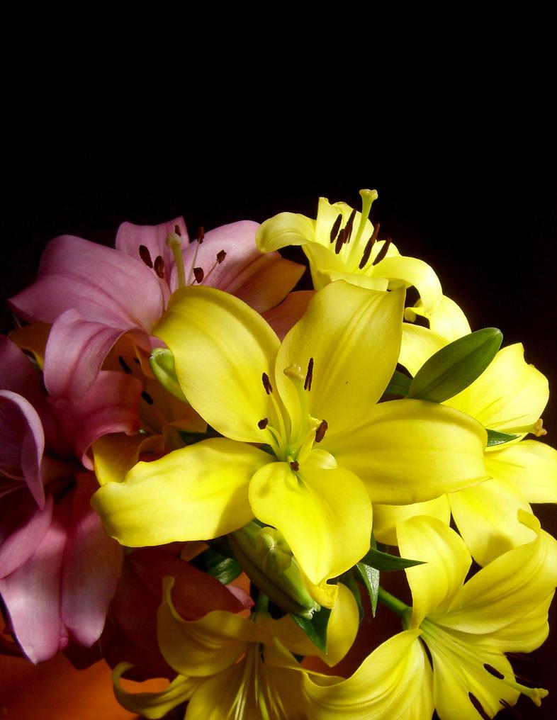 Lilis by epaz on deviantart lilis by epaz izmirmasajfo